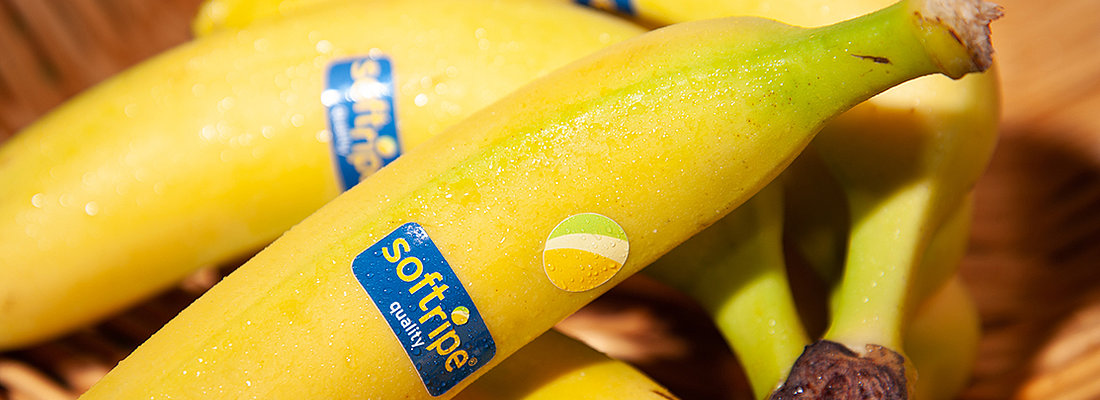 Perfectly ripened bananas with the Softripe sticker