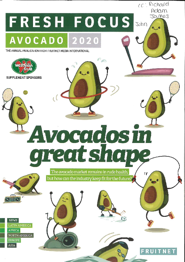 Avocados ripened with the Softripe system in Fresh Focus